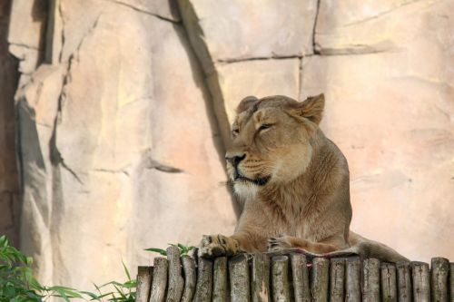 leo zoo london