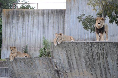 leoni africa savannah