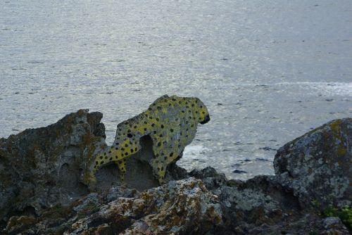 leopard galicia sea