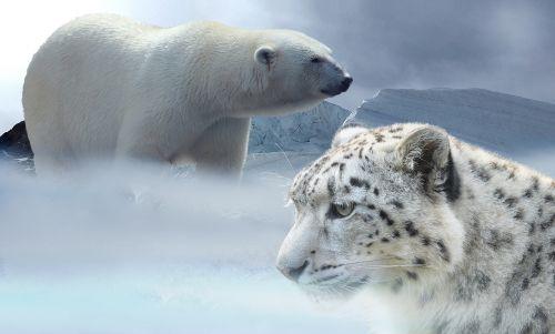 leopard snow polar bear