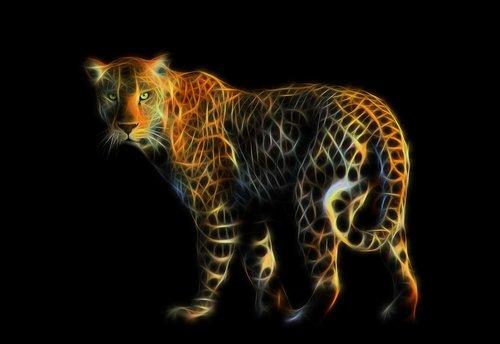 leopard  feline  predator