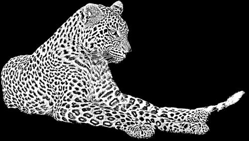 leopard  wild cat  african leopard