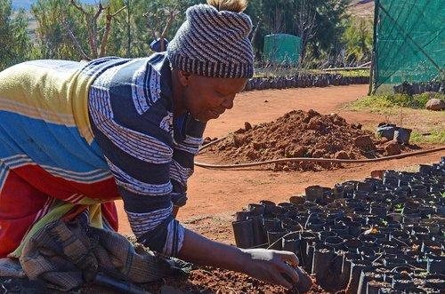 lesotho  work  horticulture