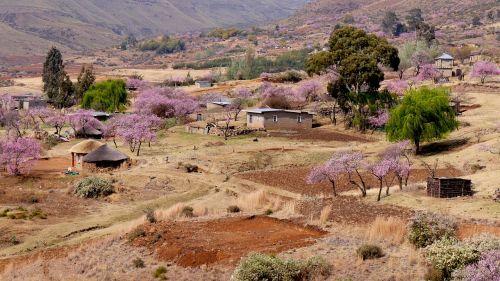 lesotho bergdorf peach blossom