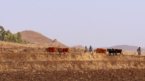 lesotho mountain country agriculture