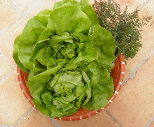 lettuce fresh vegetables organic