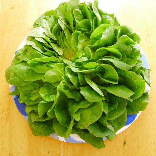 lettuce organic butter lettuce