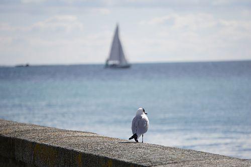 paukštis, kajakas, horizontas, valtis, jūra, mėlynas, gamta, laukinė gamta, horizontas