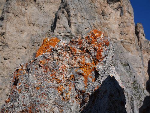 lichen orange fouling
