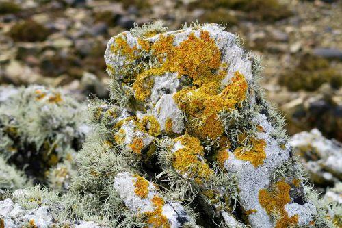 lichen pierre nature