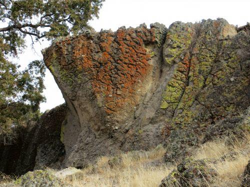 Lichen On Rock: 87