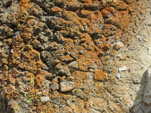 Lichen On Rock: 92