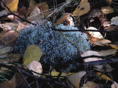 lichens mosses forest