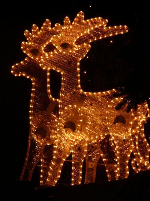 lichterkette christmas reindeer