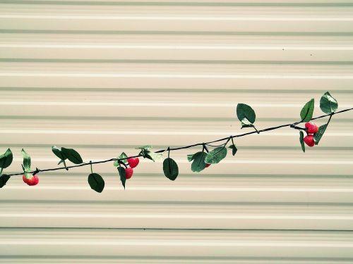 lichterkette strawberries wall