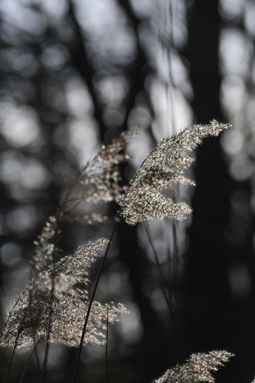 lichtspiel nature grass