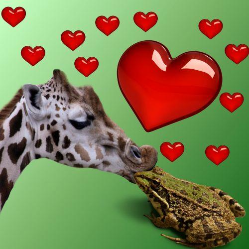 meilė, širdis, taika, meilė, santykiai, pasaulis, fonas, varlė, gyvūnas, žirafa, raudona, bučinys, meilė