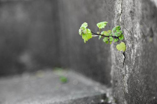 life grass tenacious