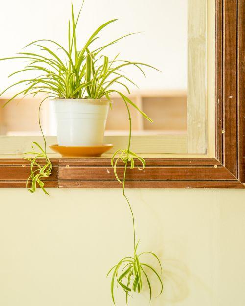 life bonsai tenacious