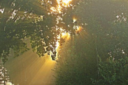 light sun morning mist