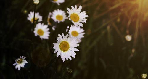 light flowers visual composer