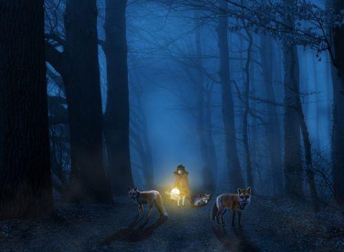 light dark nature