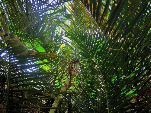 Light On Palms