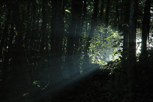 light rays beam light beam