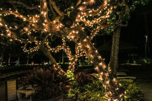 lights tree christmas lights