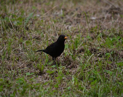 The Eye Of The Blackbird