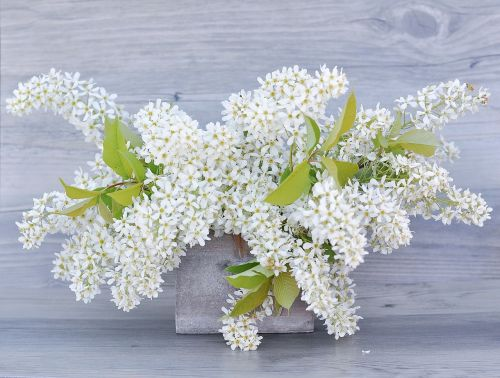 lilac flowers white