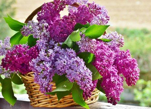 lilac  flower basket  flowers