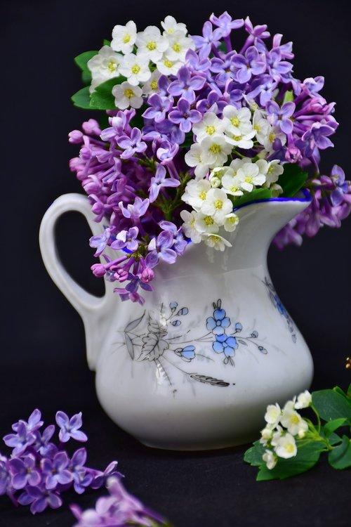 lilac  flowers  flower