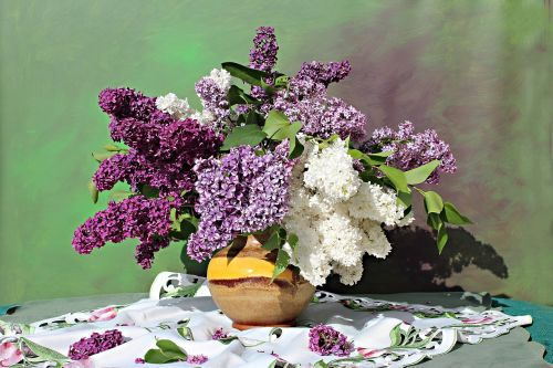 lilac bouquet lilac flower still life