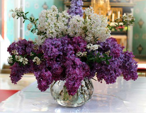 lilac bouquet lilac blossom