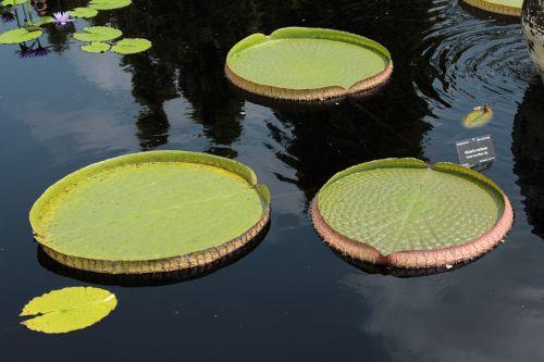 lilly lillies botanical gardens