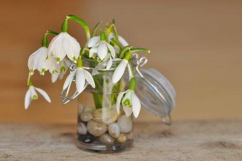 lily of the valley snowdrop decorative glass