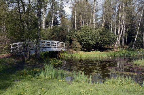 lily pond pond lily pad
