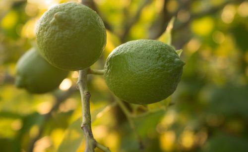 limes nature fresh