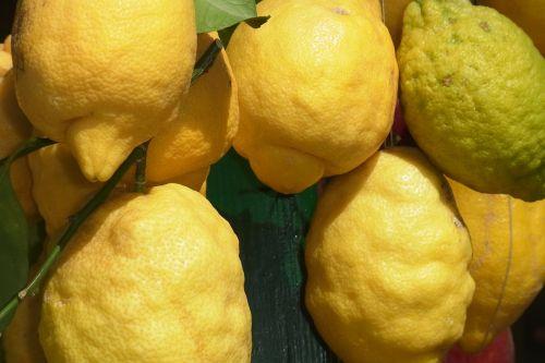 limone fruit citrus fruits