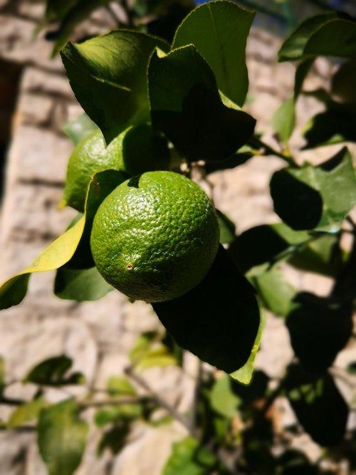 limone  lime  caipirinha