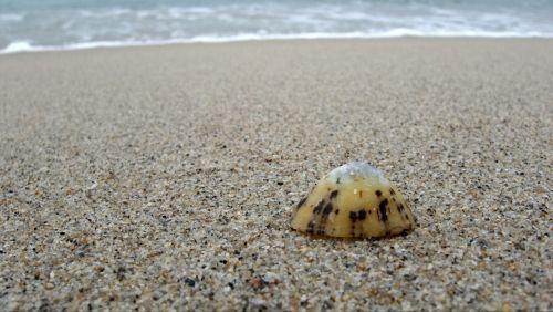 Limpet,lukštas,vienas,vienišas,vienas,vienas,papludimys,smėlis,pajūryje,jūros gėrybės,moliuskas,gastropodas,pajūris,kranto,izoliacija,paliktas,patellidae