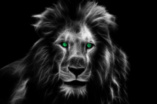 lion king africa