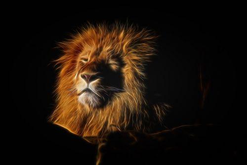 lion mane zoo