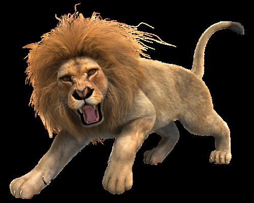 lion male mane