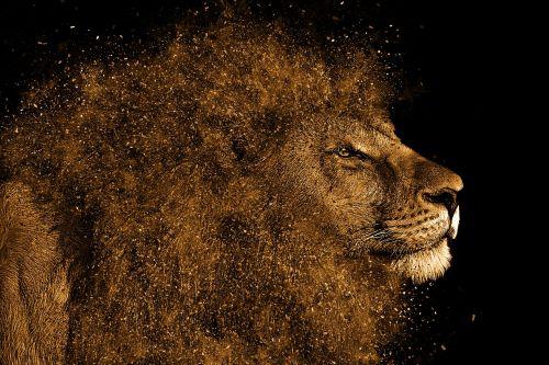 lion mane hair