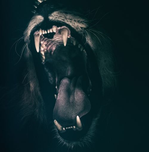 lion teeth roar