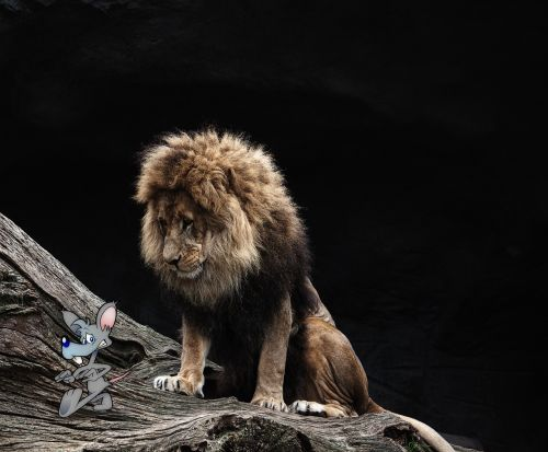 lion mouse composing