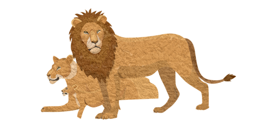 lion pixabay animal