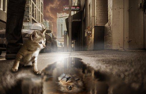 lion  cat  mirror image